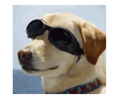 Sunglasses for your DOG ecoin